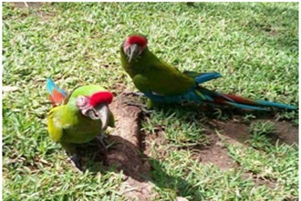 Parrot Landscaping