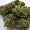 cannabispluguniverse.com/product/buy-ak-47-strain/